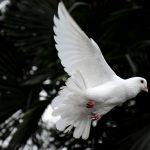 2019: Doves abound in the first quarter